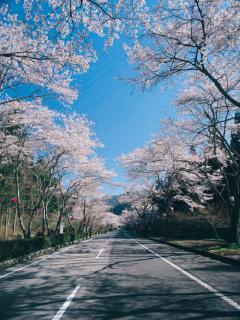 寺尾ヶ原千本桜公園の写真