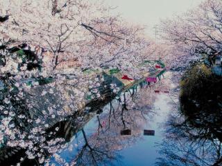 吉田川の写真1