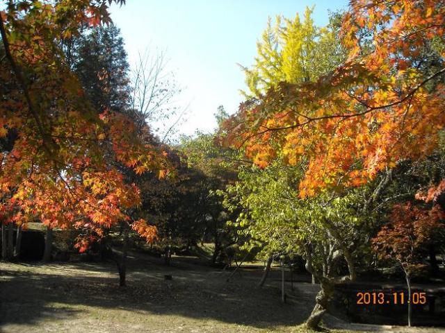 レッツなシニアさんによる曽木公園のクチコミ写真