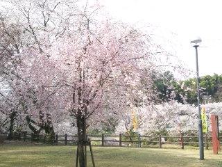 めるさんによる山楠公園のクチコミ写真