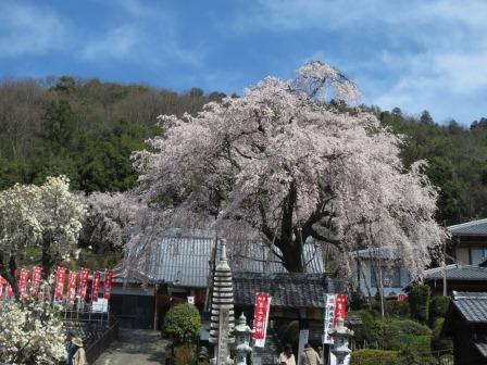 ジェミニさんによる林陽寺のクチコミ写真