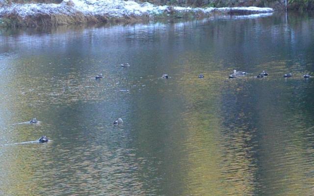 レッツなシニアさんによる松尾池のクチコミ写真