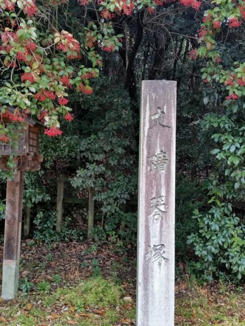 にしこさんによる琴塚古墳のクチコミ写真