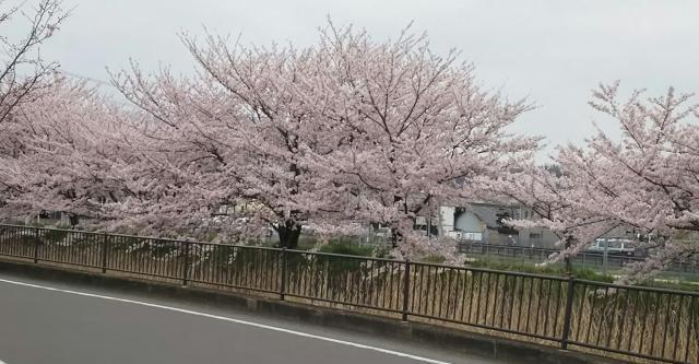 めるさんによる大安寺川のクチコミ写真