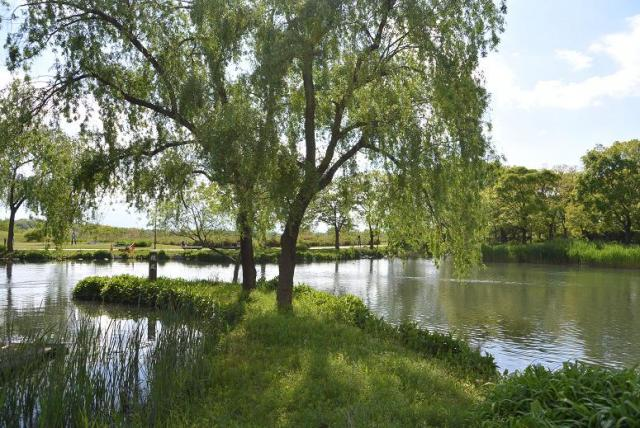 レッツなシニアさんによる河川環境楽園 自然発見館のクチコミ写真