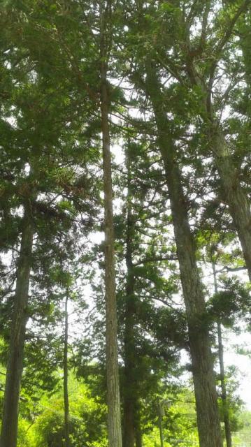 ポニョさんによる岩井山延算寺のクチコミ写真