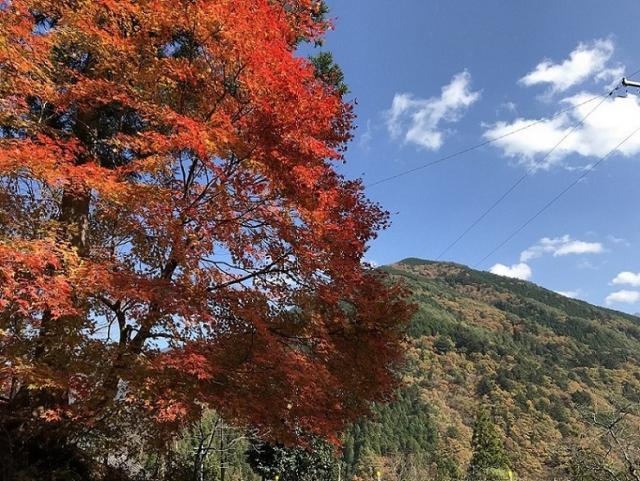 瀬戸の人さんによる渡合温泉旅館のクチコミ写真
