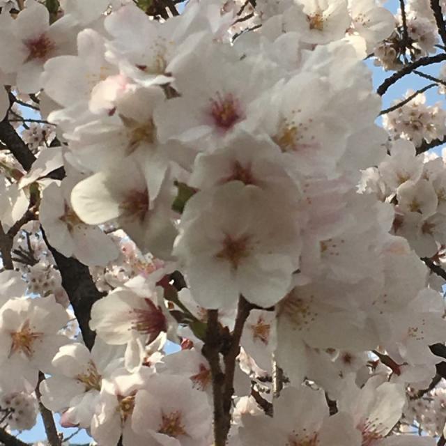 岐阜の食いしん坊担当さんによる岐阜県庁前広場のクチコミ写真