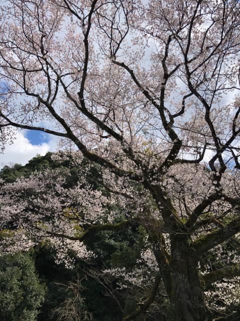 にしこさんによる岐阜護国神社のクチコミ写真