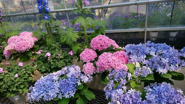 ヨゼさんによる伊木山ガーデンのクチコミ写真