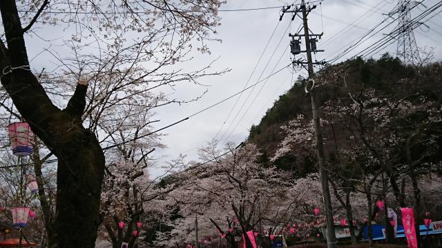 ヨゼさんによる寺尾ヶ原千本桜公園のクチコミ写真