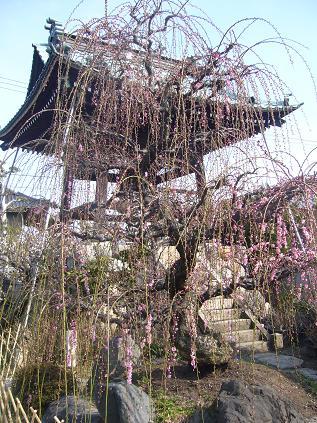 ゆかそさんによる光受寺のクチコミ写真