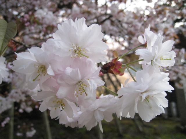 ayu☆さんによる願成寺のクチコミ写真