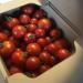 トマトの小林農園